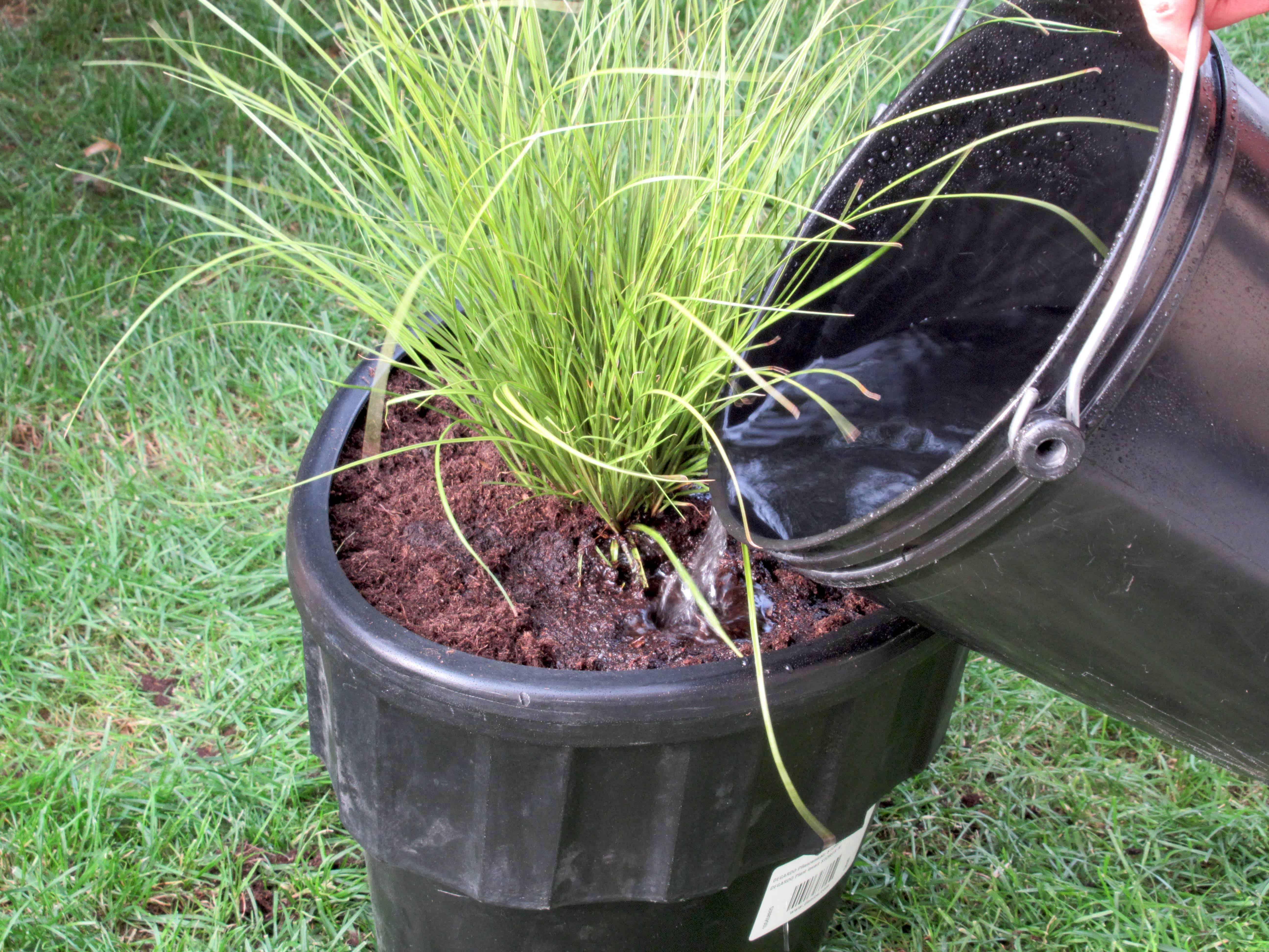 Plantje goed water geven