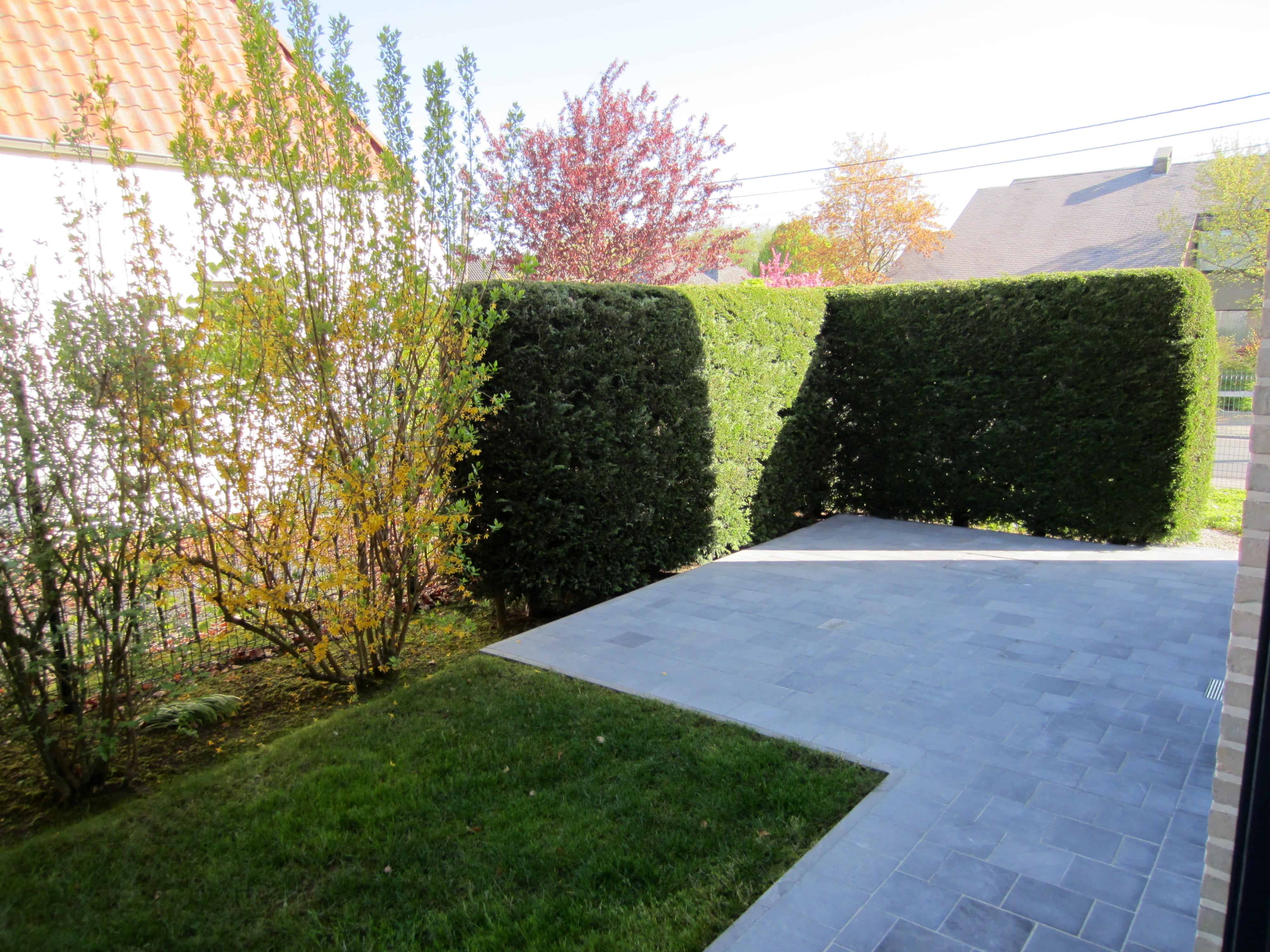 Coniferen/sparren vragen veel onderhoud, plaatsing wand/tuinscherm is onderhoudsvriendelijk alternatief