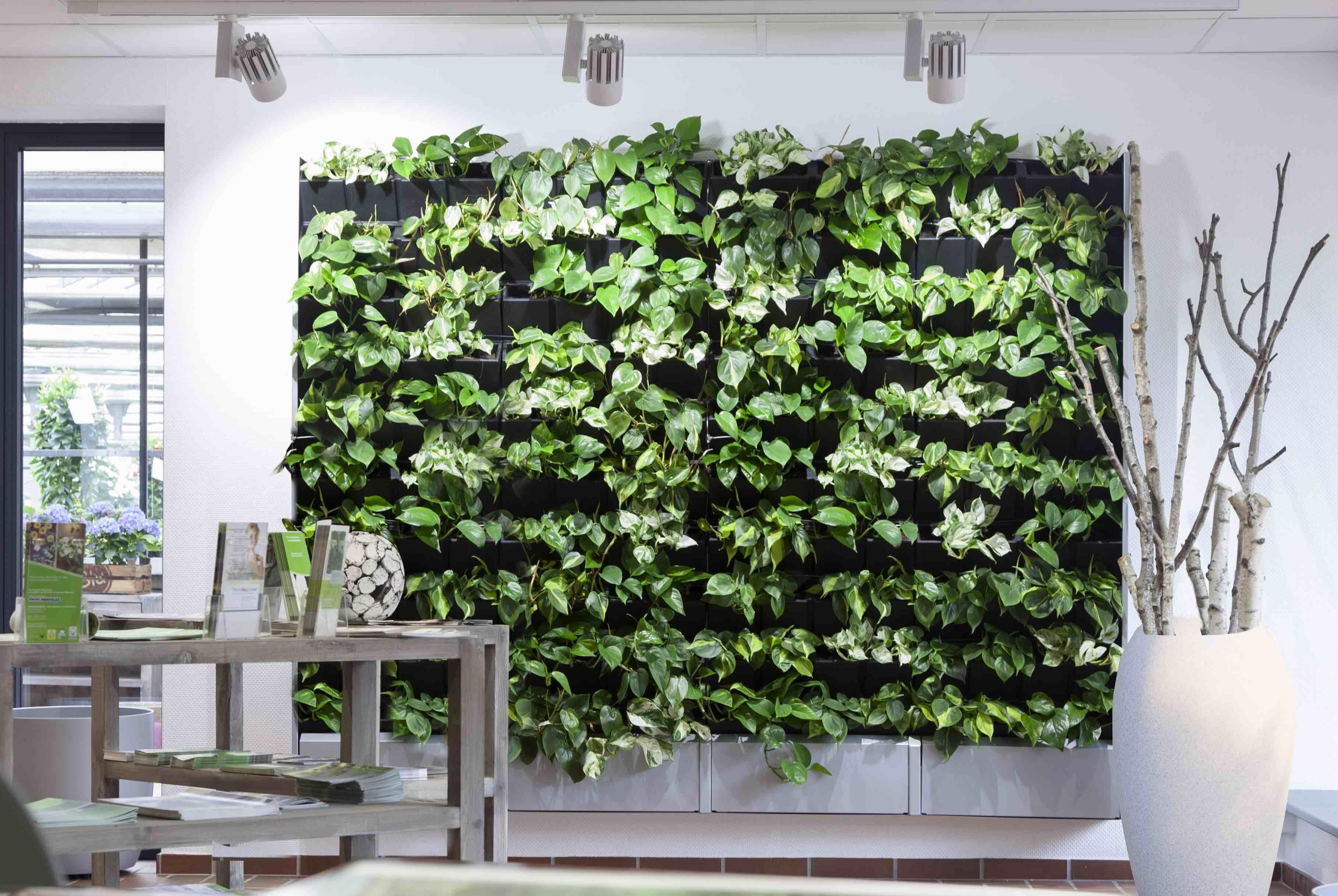 Groene wand binnen in huis, in de burelen, leefruimte of werkruimte.