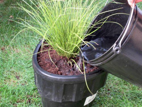 Groei plantjes stimuleren