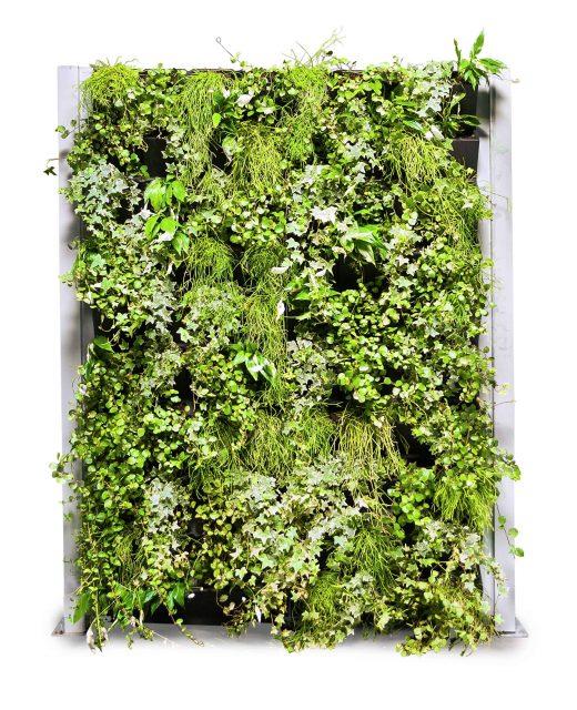 Groene, verticale tuinwand